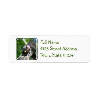 Nutty Squirrel Mailing Label Return Address Label