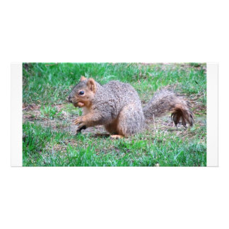 nutty squirrel personalized photo card