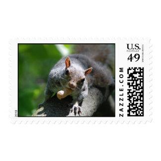 Nutty Squirrel Postage Stamp