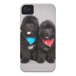 Case-Mate iPhone 4 Barely There Universal Case with Newfoundland Phone Cases design