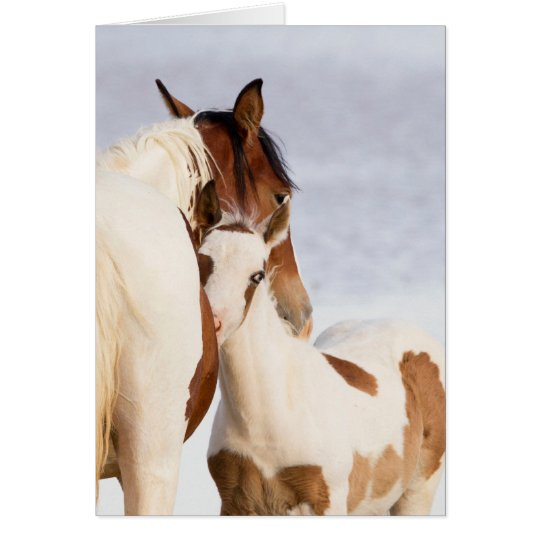 Nuzzle Wild Horse Greeting Card