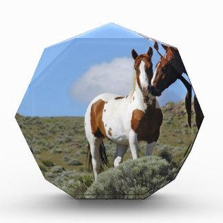 Nuzzling horses acrylic award