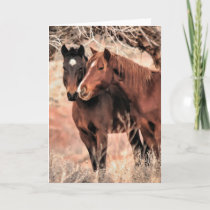 Nuzzling Horses Holiday Card