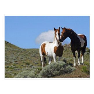 Nuzzling horses postcard