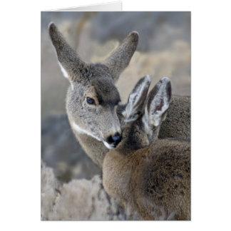 Nuzzling Mule Deer Card