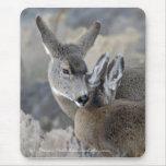 Nuzzling Mule Deer Mouse Pad