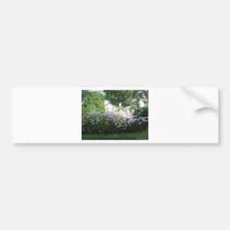 nvn718 Cherry Hill NJ USA Wild Spring Bloom White Car Bumper Sticker