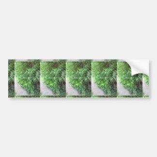 NVN720 American Spring Green GRAND n Note CARDS Bumper Sticker
