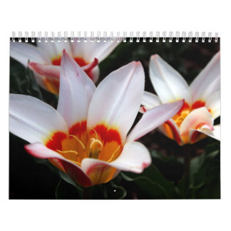NY Spring Collection 2009 Calendar