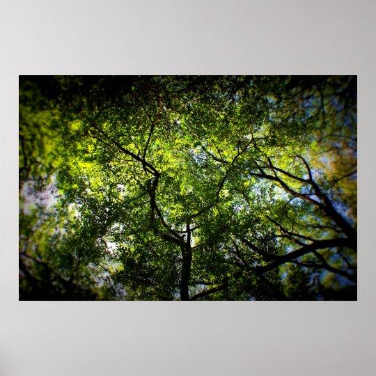NY Trees Poster