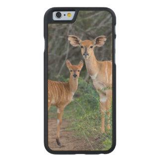 Nyala (Tragelaphus Angazii) With Young, Ndumo Carved Maple iPhone 6 Slim Case