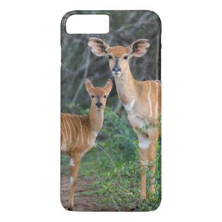 Nyala (Tragelaphus Angazii) With Young, Ndumo iPhone 8 Plus/7 Plus Case