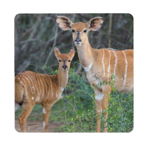 Nyala (Tragelaphus Angazii) With Young, Ndumo Puzzle Coaster