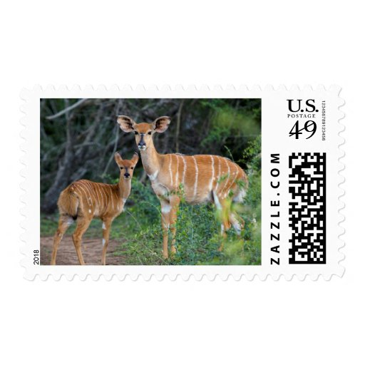 Nyala (Tragelaphus Angazii) With Young, Ndumo Postage Stamp