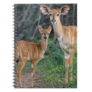Nyala (Tragelaphus Angazii) With Young, Ndumo Spiral Notebook
