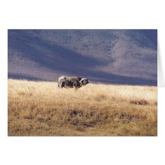 Nyati (Cape Buffalo) Card