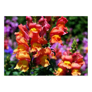 NYBG: No. 154 [Chubby] Large Business Cards (Pack Of 100)