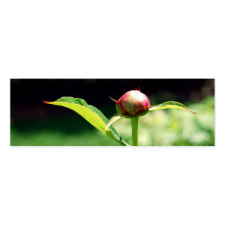 NYBG: No. 23 Double-Sided Mini Business Cards (Pack Of 20)