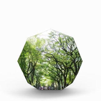 NYC Central Park Tree Tunnel Award