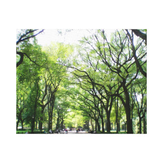 NYC Central Park Tree Tunnel Canvas Print