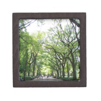 NYC Central Park Tree Tunnel Gift Box