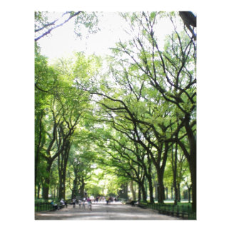 NYC Central Park Tree Tunnel Letterhead