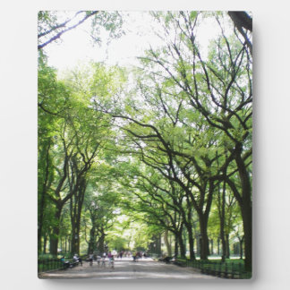 NYC Central Park Tree Tunnel Plaque