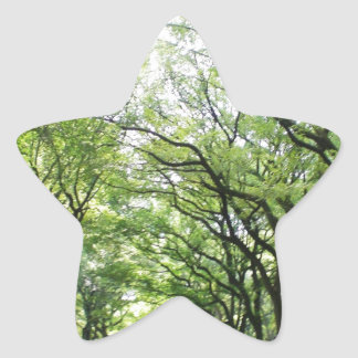 NYC Central Park Tree Tunnel Star Sticker
