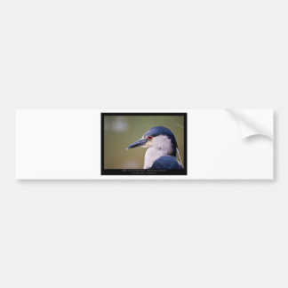 Nycticorax nycticorax - Black-crowned Night-Heron Bumper Sticker