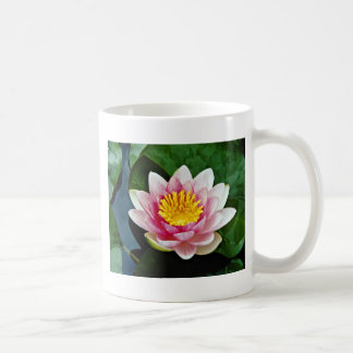 Nymphaea attraction, red, hardy water lily  flower classic white coffee mug