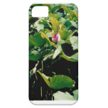 Nymphaea Flower Case iPhone 5 Cover