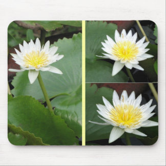 Nymphaea Flower Mouse Pad