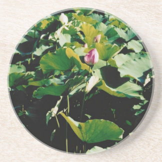Nymphaea Flower Style Coasters