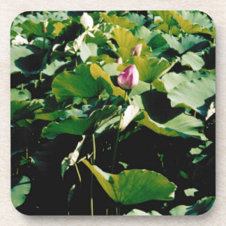 Nymphaea Flower Style Drink Coaster