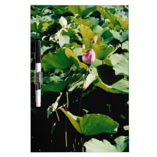 Nymphaea Flower Style Dry-Erase Board