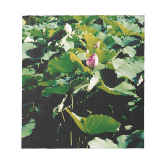 Nymphaea Flower Style Memo Note Pad