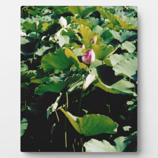 Nymphaea Flower Style Plaques