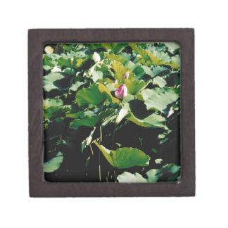 Nymphaea Flower Style Premium Jewelry Box