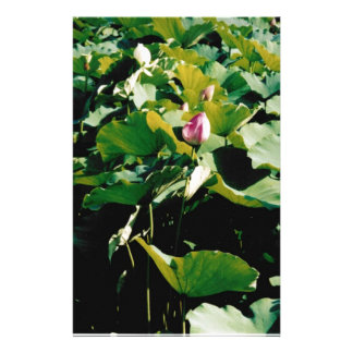 Nymphaea Flower Style Stationery Paper