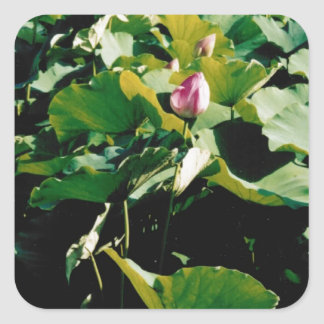 Nymphaea Flower Style Stickers