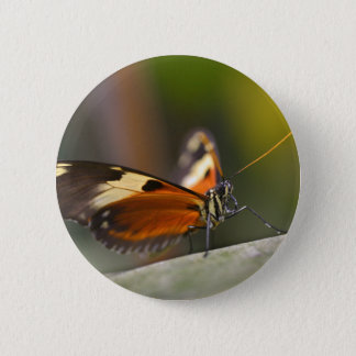 Nymphalidae butterfly on leaf pinback button