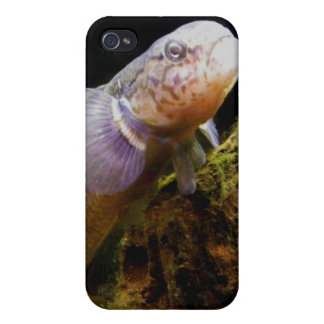 NZ Bully iPhone 4/4S Cases