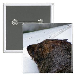 NZ Fur Seal Pinback Buttons