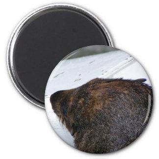 NZ Fur Seal Magnet
