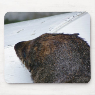 NZ Fur Seal Mouse Pad