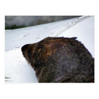NZ Fur Seal Postcard