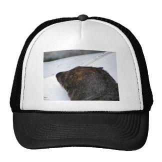 NZ Fur Seal Trucker Hat