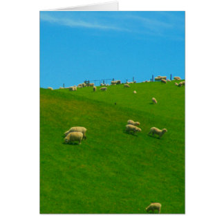 nz hill sheep card