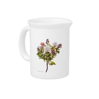 NZ Native Flowers - Meterosideros albiflora Beverage Pitchers