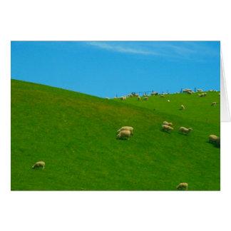 nz sheep hill card